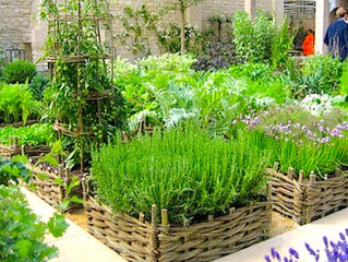 Growing Your Own #Herbs