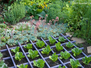 Different Vegetable Gardening Styles