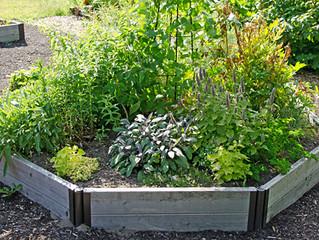 Herb Gardening #herb #garden