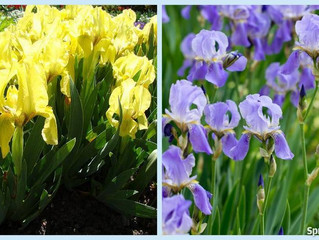 Growing Beautiful Flowers From Bulbs