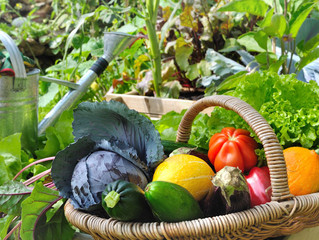 Why Is #Organic #Vegetable #Gardening So Important These Days