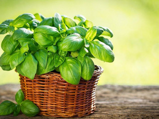 #Basil: The King of #Herbs