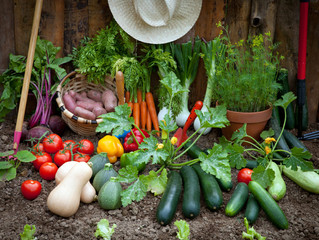 Tips for Organic Vegetable Gardening