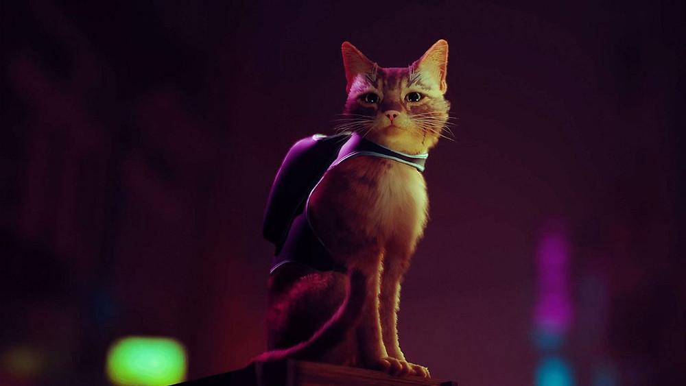 Stray das beste Spiel für Katzen Fans PS5