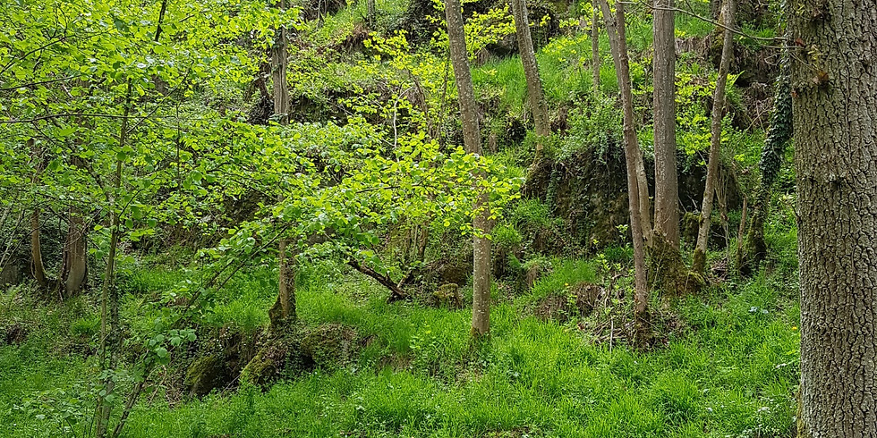 Soins individuels en forêt