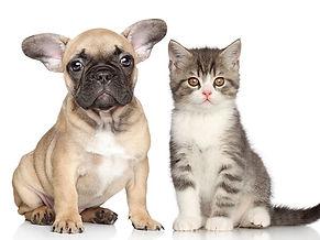"""כלב וחתול - ד""""ר אריק אלחלל"""