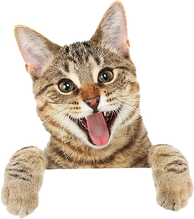 דוקטור אריק אלחלל - וטרינר - חתול (1)_ed
