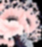 Boutique Pau, Boutique vêtements Pau,Boutique Accessoires Pau,Concept Store Pau,Vêtements créateurs en ligne,Appart de Camille Pau,Pau,Achat vêtement Pau,Boutique indépendante Pau,Achat déco Pau,Mode Pau,boutique en ligne