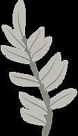 plante-grise.png
