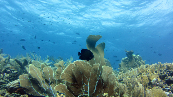 Healthy reefs at oostpunt produce 3 time
