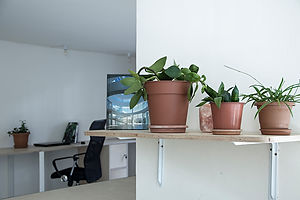 coworking tbilisi plants