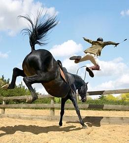 horse_throwing_rider_1696.jpg