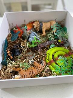 jungle box LO.jpg