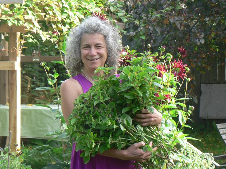 harvesting basil for winter pesto supply