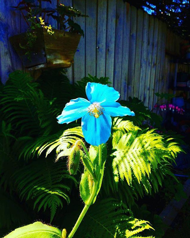 Next Level Flora_#Alaskasalmonfertilizer