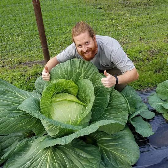 Cabbage Attack.jpg