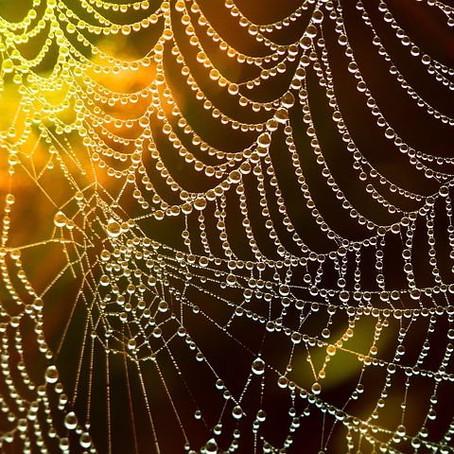 Webs That I Spun