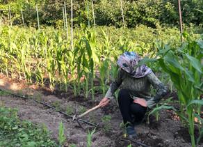 Çiftliğimizi Tanıtıyoruz: Bozköy, Aliağa