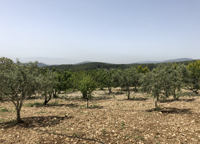 Çiftliğimizi tanıtıyoruz: Yakaköy, İzmir