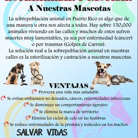 Clínica Veterinaria Mi Mascota (1).png