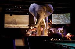 Leven olifant Mike Bink Fotografie museu