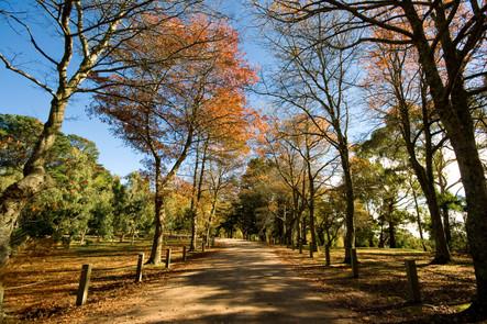 Autumn at Seawinds Gardens, Arthurs Seat