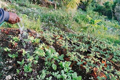 DSC05570_farm.jpg