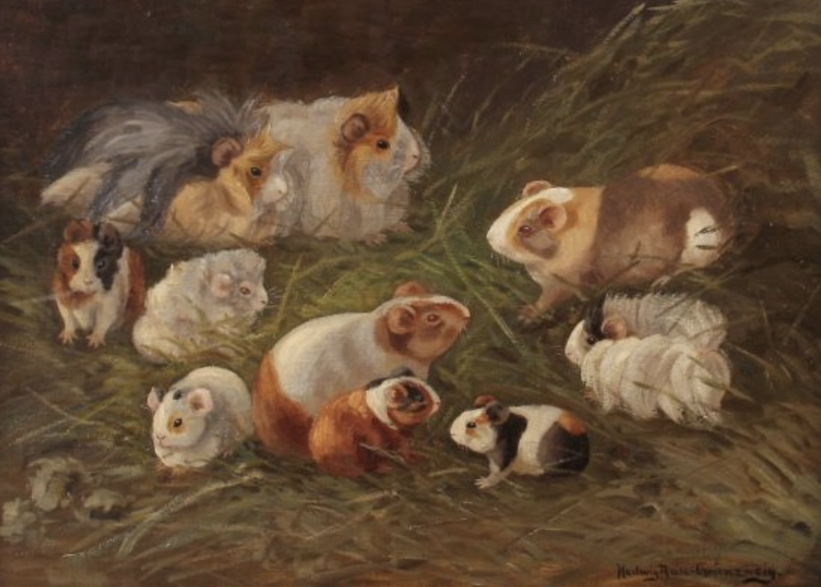 Ten Guinea PIgs on the Grass