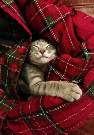 Cats just LOVE tartan!