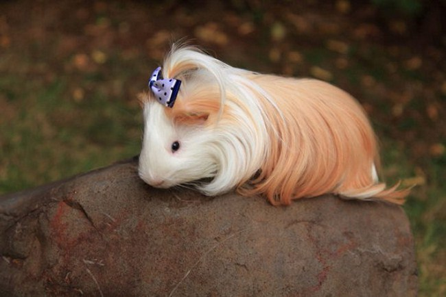 Young Pig Hairstyles
