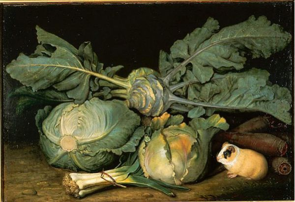 Calico Guinea Pig with Cabbages