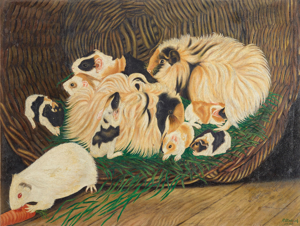 Angora Guinea Family and White Shorthair Pig with Carrot