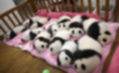 The Pink Panda