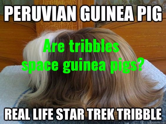 guineapigtribbles_edited