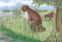 Phoberomys pattersoni