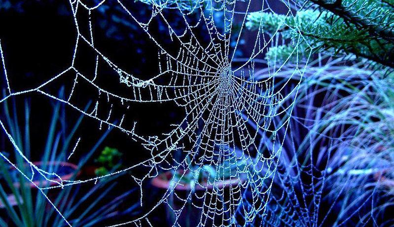 The Dancer's Web