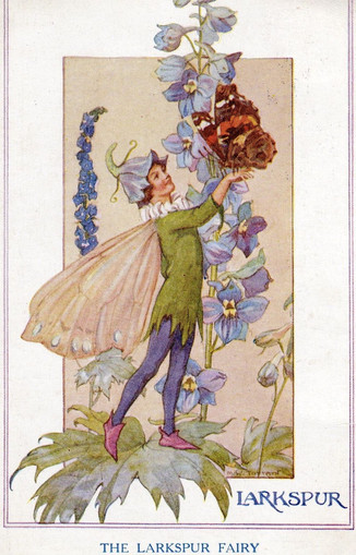"""""""Why do they call them larkspurs?"""" Tommy demanded. """"I don't know, I must admit,"""" Mr. Drew replied. """"Nancy is the gardener. Perhaps she can tell you."""" """"Why, I don't know either,"""" Nancy exclaimed. """"They are also called delphiniums, and I know why that is their name. They were the favorite flowers used by the Greeks to decorate the altar of the temple of Apollo at Delphi. """" ~ The Password to Larkspur Lane, Nancy Drew Mysteries"""