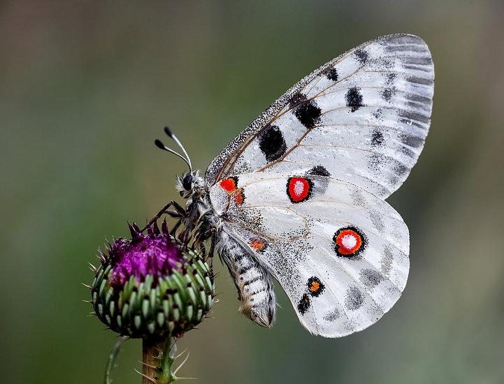 The Moth Ball