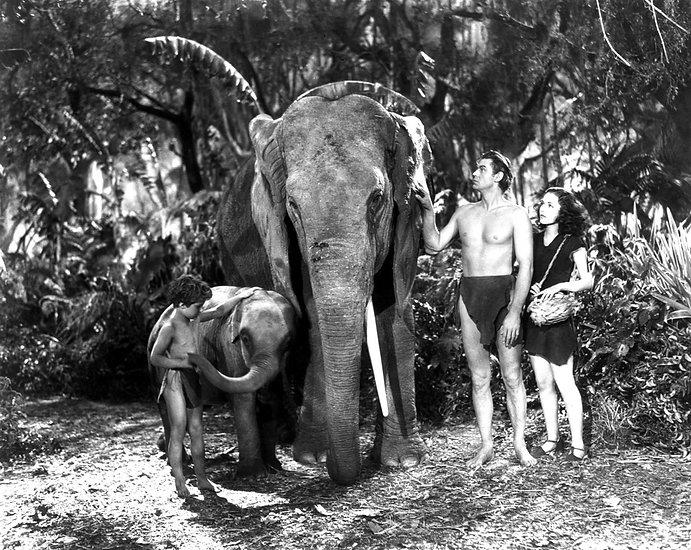 The Jungle Jig