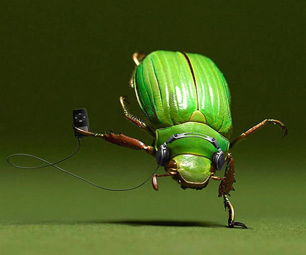 The May Beetle's Dance