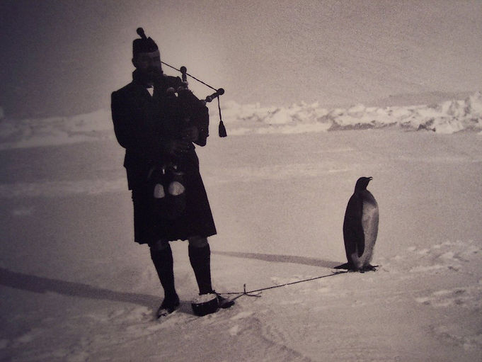 The Piper and the Penguin