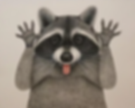 Raccoon Ramble