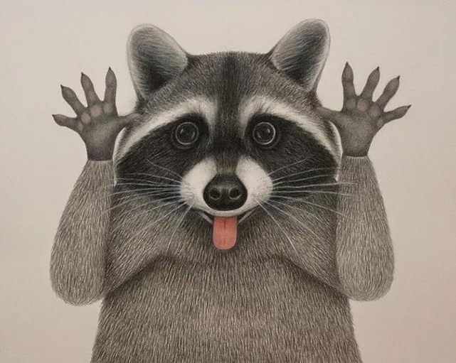 Raccoon Ramble