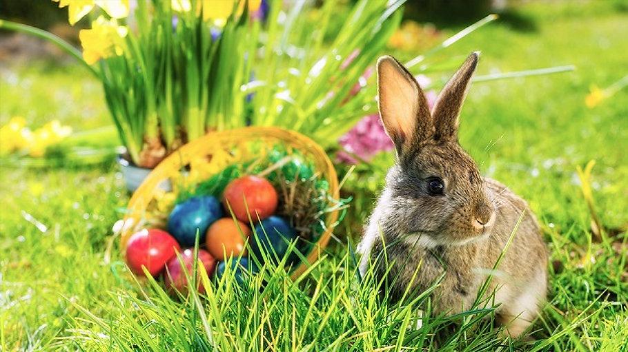 The Easter Egg