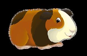 Guinea Pig Food Hay Pellets
