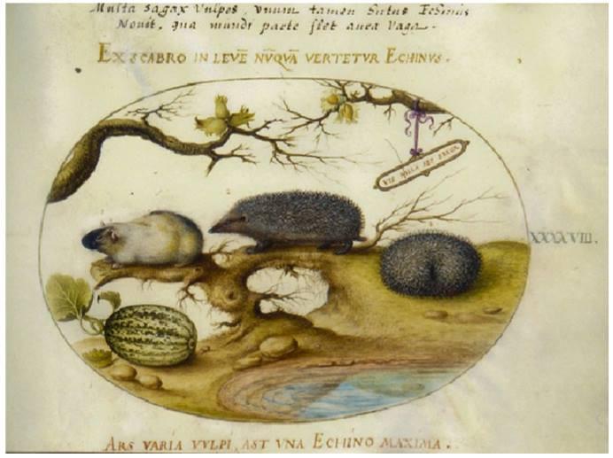 Plate 48 Animalia Quadrupedia et Reptilia (Terra)