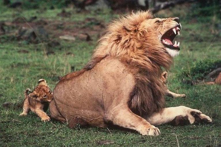 Rampant Lion - After 10AM