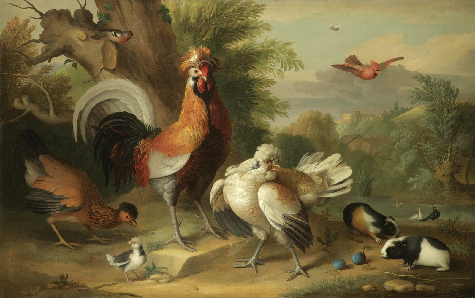 A Cockerel, Chickens, Other Birds With Guinea Pig