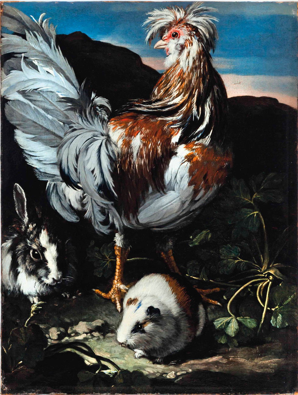 A Rooster, Rabbit and Guinea Pig