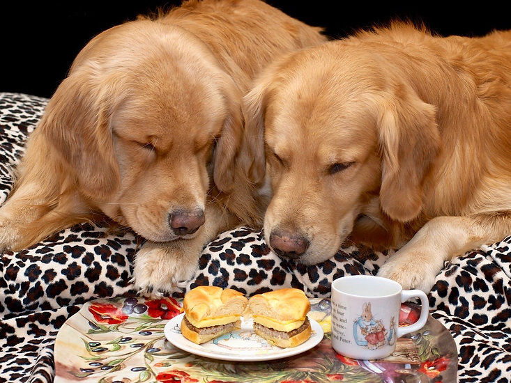 A Dog's Breakfast